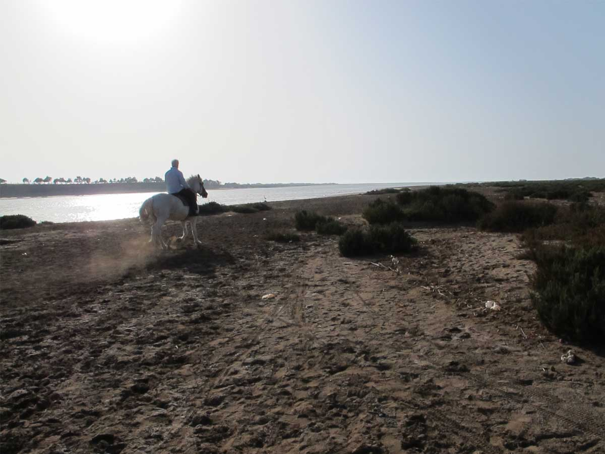 horse riding at the beach of Agadir, Morocco